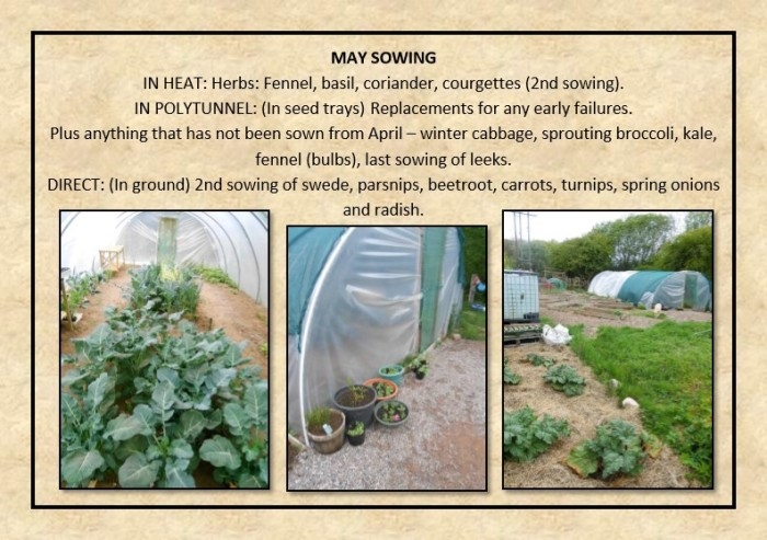 Guide to Vegetable Growing around Coupar Angus-15