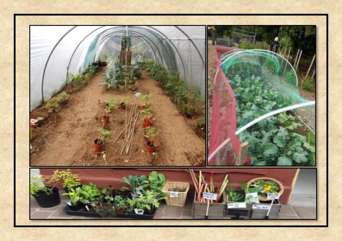 Guide to Vegetable Growing around Coupar Angus-17
