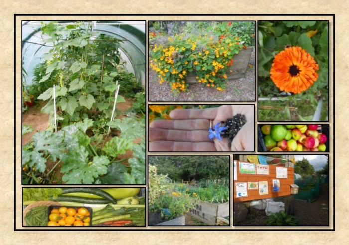 Guide to Vegetable Growing around Coupar Angus-3